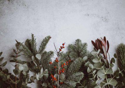 Flores típicas de Navidad