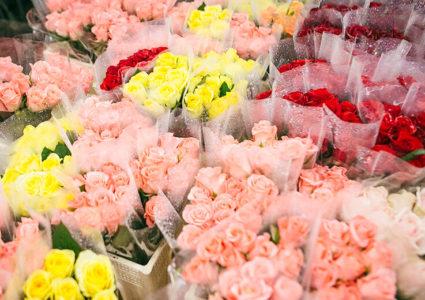 Rosas: nacionales, holandesas y de Colombia